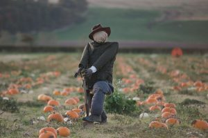 Kilduff Farm East Lothian pumpkin patch shoot_0006